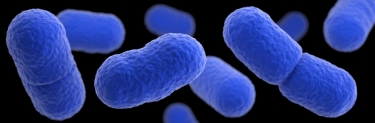 CDC: 10 people have been infected by Listeria, 1 death reported   News