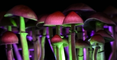 Magic Mushrooms: Possible Cure for Depression and Anxiety?