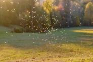 Mosquito-Borne Viruses Linked To Stroke
