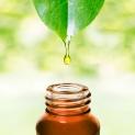 Magnolia Bark Extracts Risks & Benefits