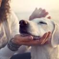 Dogs Like Hearing I Love You Too