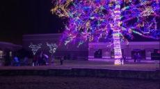 The Crossing Magic Tree lighting kicks off Christmas celebrations – krcgtv.com