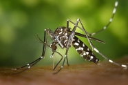 COVID-19: Can Mosquitoes, Ticks Spread Virus? CDC, World Health Organization Weigh In